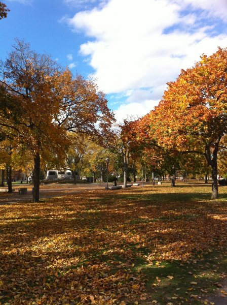 Cambridge Common in the fall