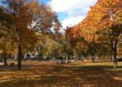 Cambridge Common in the fall