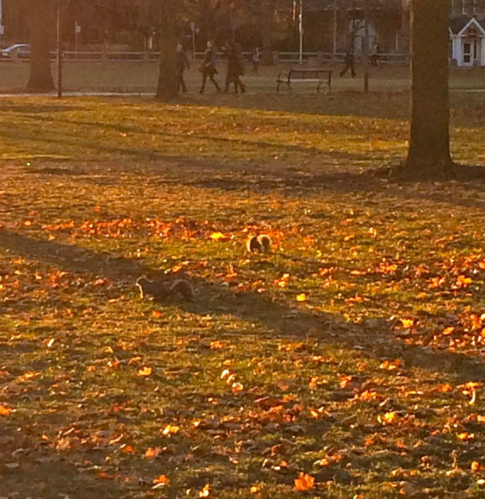 Scampering squirrels